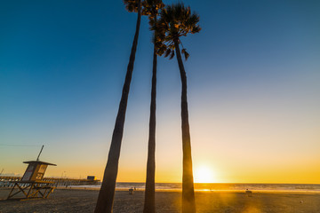 palms and lifeguard tower in Newport Beach