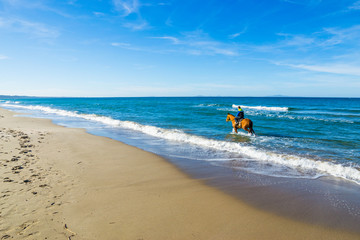 rider and horse in the water in Sardinia