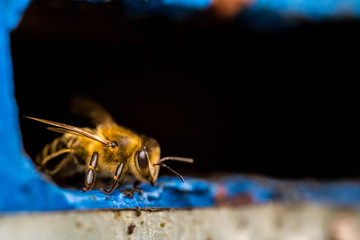 Hives in an apiary with bee
