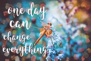 Beautiful picture with a dragonfly and motivating words