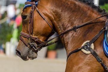 pferd bei turnier detail