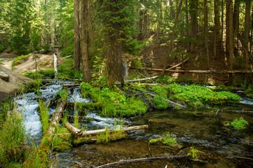 Green Lush Creek