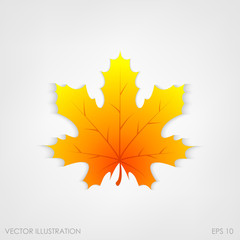 Maple leaf in a realistic style on  white background