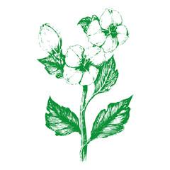 Green Flower7