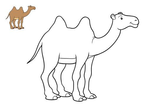 Coloring book, Camel