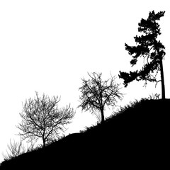 Realistic trees silhouette (Vector illustration).