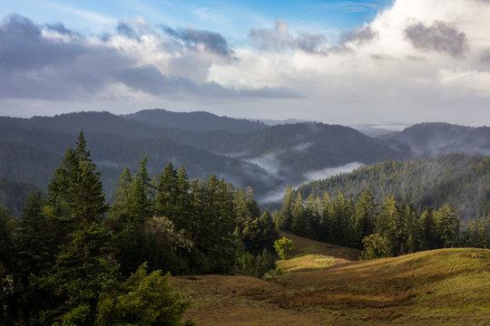 Redwood Forest Vista - Northern California