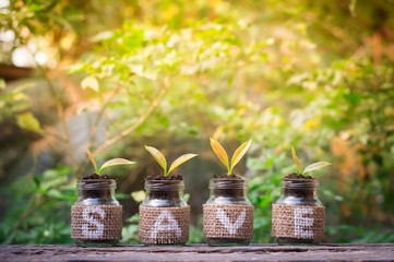 Young plants growing in the glass bottle on old wooden table for business investment growth or saving concept