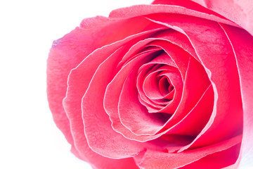 Love and Valentine concept, petal layer of beautiful red rose bl