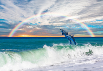 Two Bottlenose Dolphins  adult, jumping out of the sea against rainbow