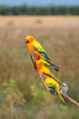 group of Parrot