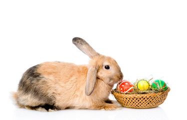 Rabbit sitting with basket easter eggs. isolated on white