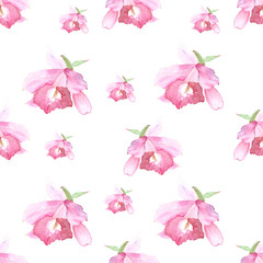 Pink orchid, cattleya on white background. Seamless watercolor pattern