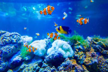水槽の中の熱帯魚たち