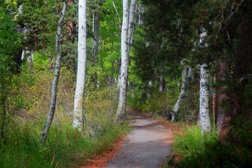 Walking and bike trail in woods