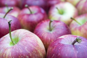 Fototapete - Rote Äpfel