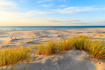 Fototapete - Grass on sand dune in sunset golden colors  on Leba beach, Baltic Sea, Poland