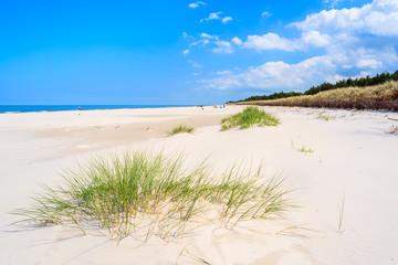 Fototapeta Green grass on white sand beach in Lubiatowo, Baltic Sea, Poland