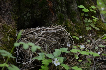 on tree. bird's nest in the forest with the egg