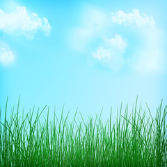 Nature spring background. Grass background. Summer. Idyll.