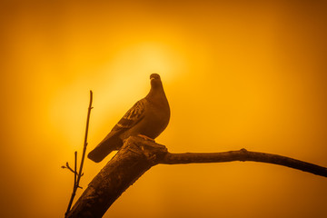 Pigeon on a tree