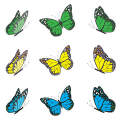 vector butterfly set