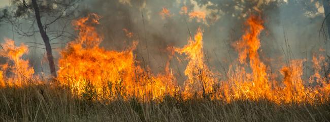 Bushfire in the Kimberley region, Western Australia Wall mural