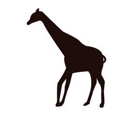 silhouette giraffe