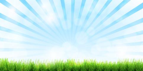 新緑 草 芝生 背景