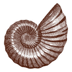 Doted Ammonite Shell    - vector illutration