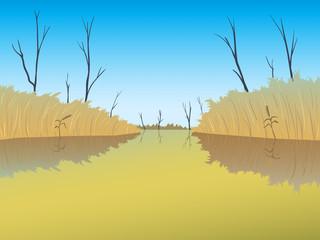 A swamp