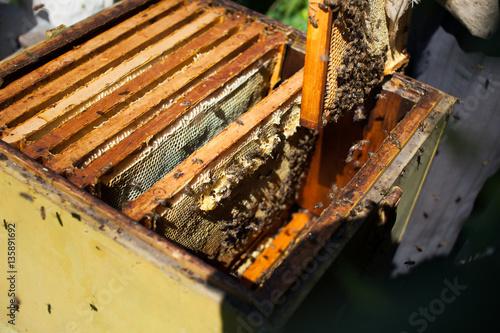 Frames of a bee hive. Beekeeper harvesting honey. The bee smoker is ...