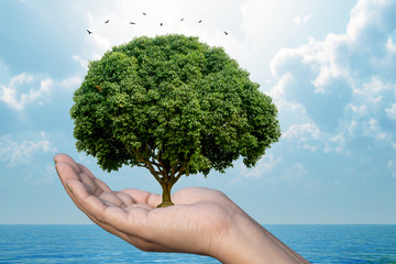 Ecology Nature protection concept showing a human hand holding a  tree with nature background.