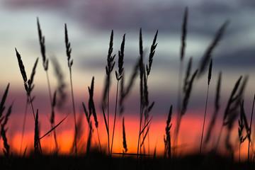 Twilight straws