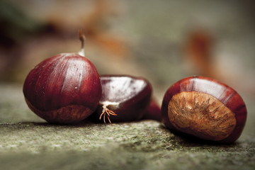 Chestnuts on a stone. Picture taken in a wood, during the autumn, in the North of Italy.
