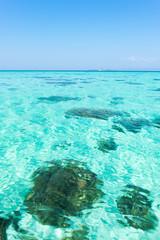 Blue marine glow ripple water wave in sea ocean under bright sum