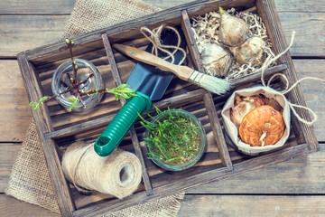 Gardening and planting concept. Seedlings garden tools tubers bulbs gladiolus and hyacinth branch of trees with buds in wooden box. Toned and processing photo.