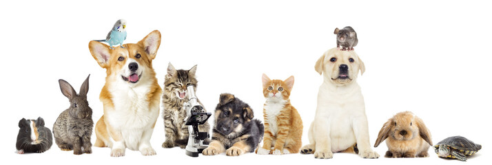 Fototapete - set pet on a white background