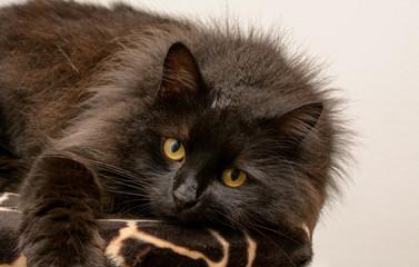 Katze Blickt mit grossen Augen in die Kamera