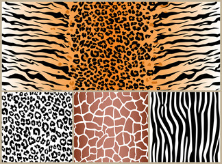 set safari jungle animal fur stripe animals bengal tiger giraffe zebra texture pattern seamless repeating white black orange brown