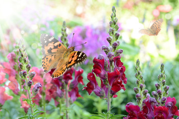 Schmetterling 251