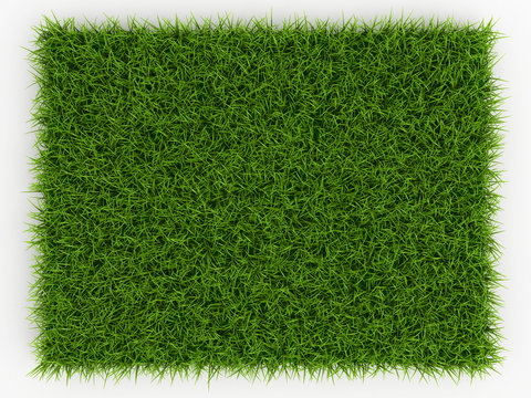 Top view of Fresh Spring Green Grass - natural background - 3d r