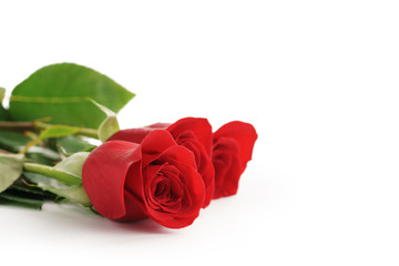 three red roses on white background with copy space, isolated photo