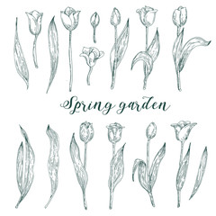 Set of spring flowers tulips branches. Sketch collection vector illustration