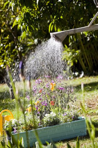 Arroser des jardini res de fleurs dans un jardin stock for Fleurs dans un jardin