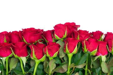 Bouquet of dark red fresh rose buds border isolated on white background