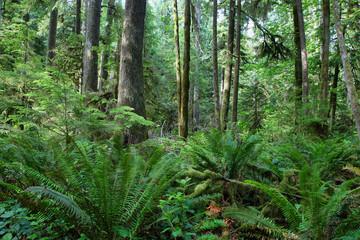 Sol Duc falls trail forest