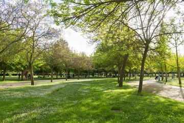 Parque Publico en Primavera con Gente