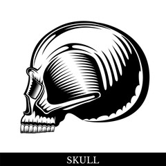 Black human skull in profile without a lower jaw