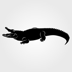 Crocodile icon on white background
